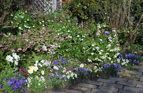 Cローズの庭100316wb.jpg