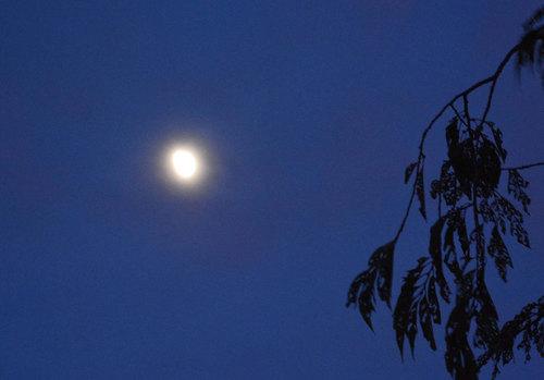 おぼろ月wb.jpg