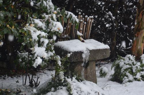 つくばい雪20140208wb.jpg