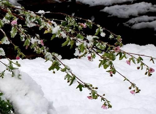 アニソド1226雪2upwb.jpg