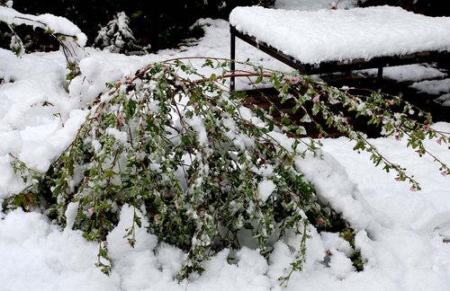 アニソド1226雪2wb.jpg