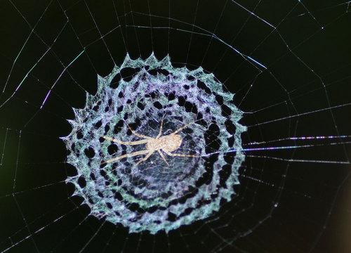 クモの巣レースwb.jpg