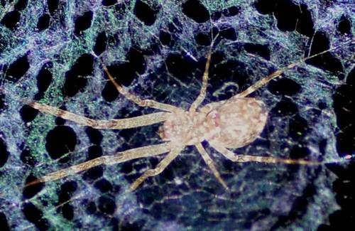 クモの巣レースwb3.jpg