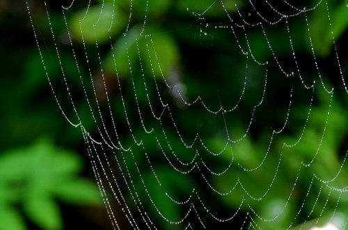 クモの巣雨上がりwb2.jpg