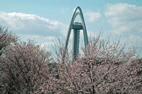 ツインタワー桜wb2.jpg