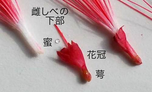 ネム解体拡大wb.jpg