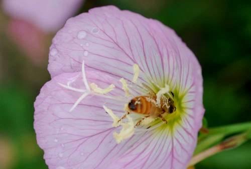 ミツバチ1wb2.jpg