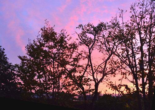 夕焼け樹々wb2.jpg