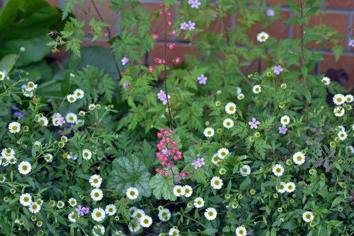 日陰の庭2016wb.jpg