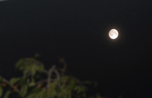 満月wb.jpg