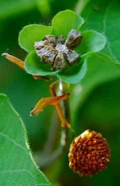 種子クモの巣表半wb.jpg