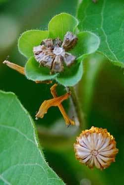 種子クモの巣裏半wb.jpg