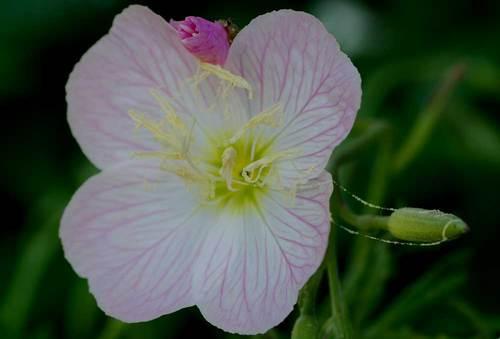 糸引く花粉1wb2.jpg