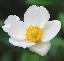 花いろいろ1wb.jpg
