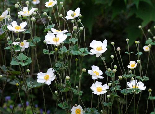 花いろいろwb.jpg