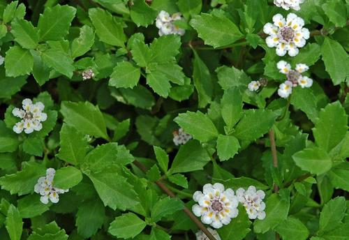 花と葉wb.jpg