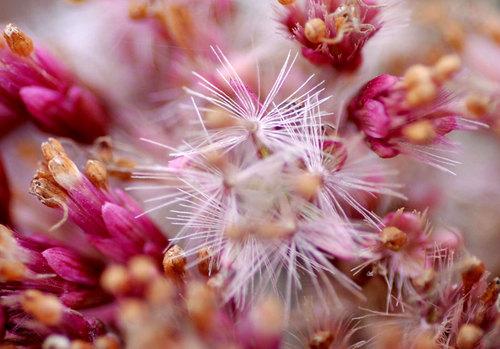 花の終わりwb2.jpg
