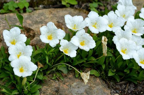 花殻摘み前wb.jpg