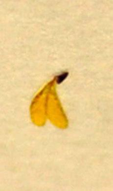 花粉塊1-2wb.jpg