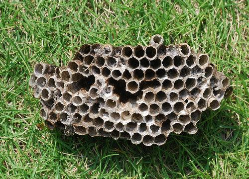 蜂の巣09-1wb.jpg