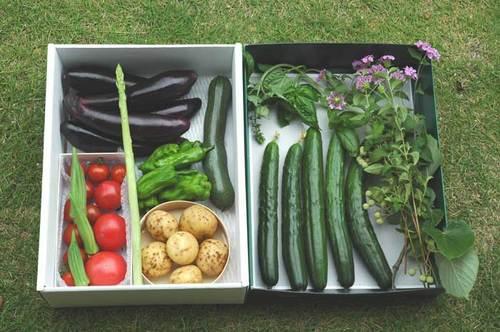 野菜お見舞いwb.jpg