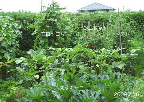 野菜畑090716wb.jpg