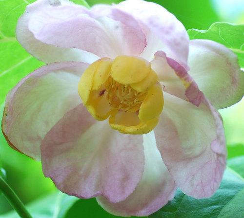 雄性期花粉800-77wb.jpg