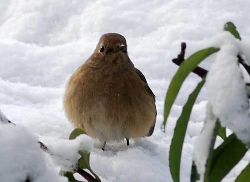 雪の日3wb.jpg