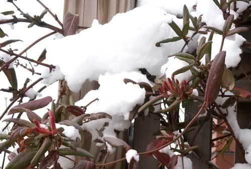 雪の日の花wb.jpg