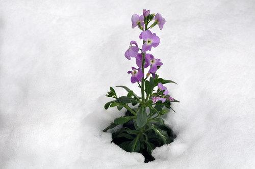 雪ストック1wb.jpg