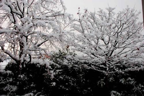 雪ヤマボウシwb.jpg