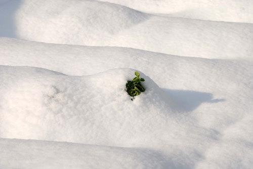 雪後のwb.jpg